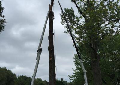 Abattage d'arbre - coupe d'arbre - Service d'entretien d'arbres Viau