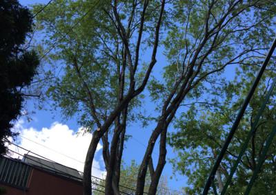 Élagage d'abres résultat final - Service d'entretien d'arbres Viau