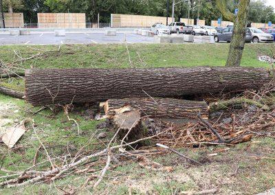 abattage à l'aéroport de Dorval(abattage d'arbre) - Service d'entretien d'arbres Viau