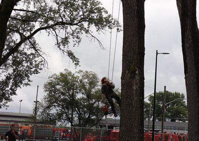 arbre abatu à une aéroport(abattage d arbre) - Service d'entretien d'arbres Viau