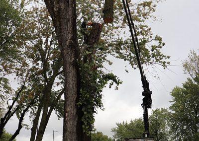 coupage de l'arbre en plusieurs partis(abattage d'arbre) - Service d'entretien d'arbres Viau