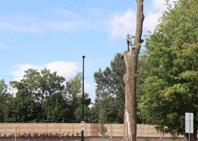Abattage d'abre trop proche de fil électrique(abattage d'arbre) - Service d'entretien d'arbres Viau