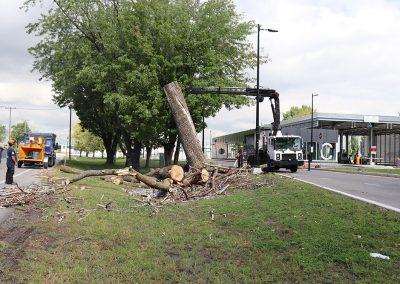 utilisation d'une machine pour dérassiner l'arbre(abattage d'arbre) - Service d'entretien d'arbres Viau