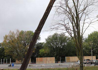 tronc entrain de tomber (abattage d'arbre) - Service d'entretien d'arbres Viau
