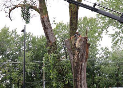 Grue qui soulève un tronc (abattage d'arbre) - Service d'entretien d'arbres Viau